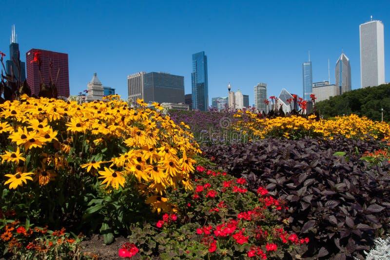 Chicagowski pejzaż miejski na jaskrawym słonecznym dniu obrazy royalty free