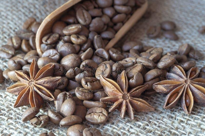 Chicchi, anice stellato e cannella arrostiti di caff? immagine stock