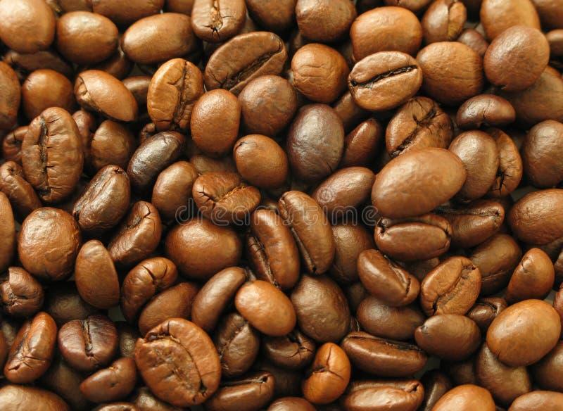 Download Chicchi di caffè fotografia stock. Immagine di alcoolizzato - 3134346