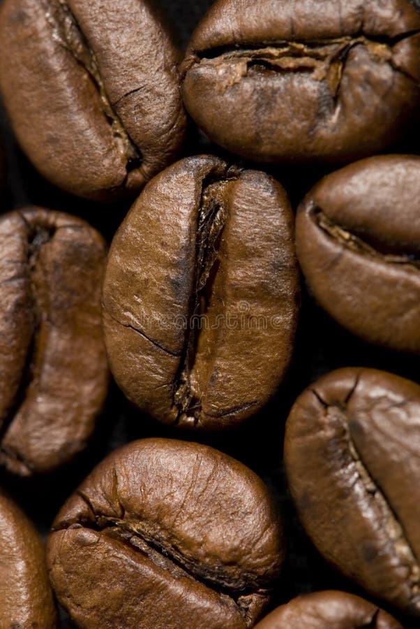Download Chicchi di caffè fotografia stock. Immagine di caffè, macro - 7321664