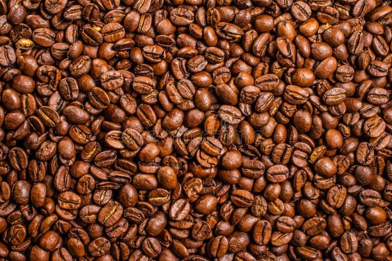 Chicchi di caffè buongustaio, arrostito, macro, buio, energia fotografia stock