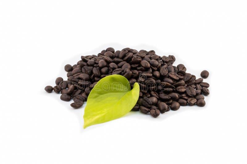 Chicchi di caffè con la foglia su fondo bianco fotografia stock