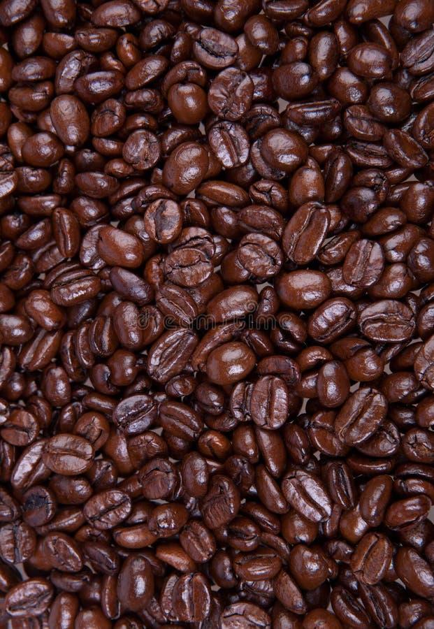 Chicchi di caffè del caffè espresso immagine stock