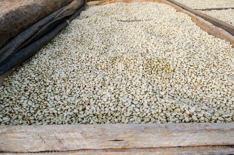Chicchi di caffè di secchezza fotografie stock