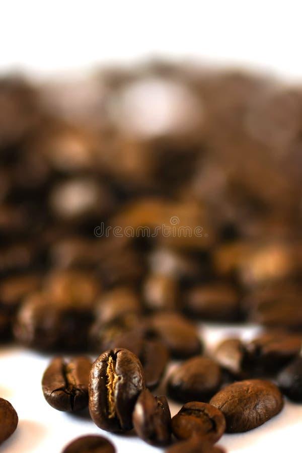 Chicchi di caffè freschi fotografie stock