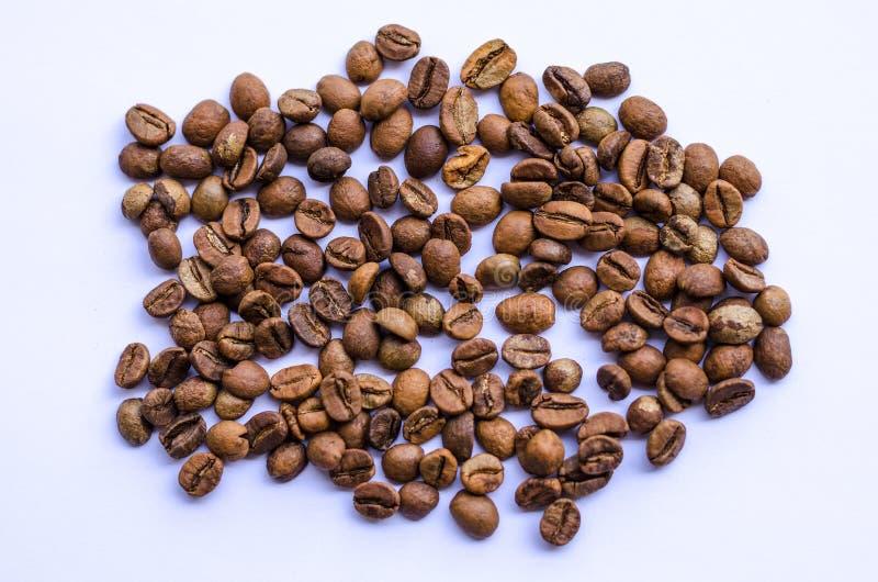 Chicchi di caffè freschi fotografia stock libera da diritti