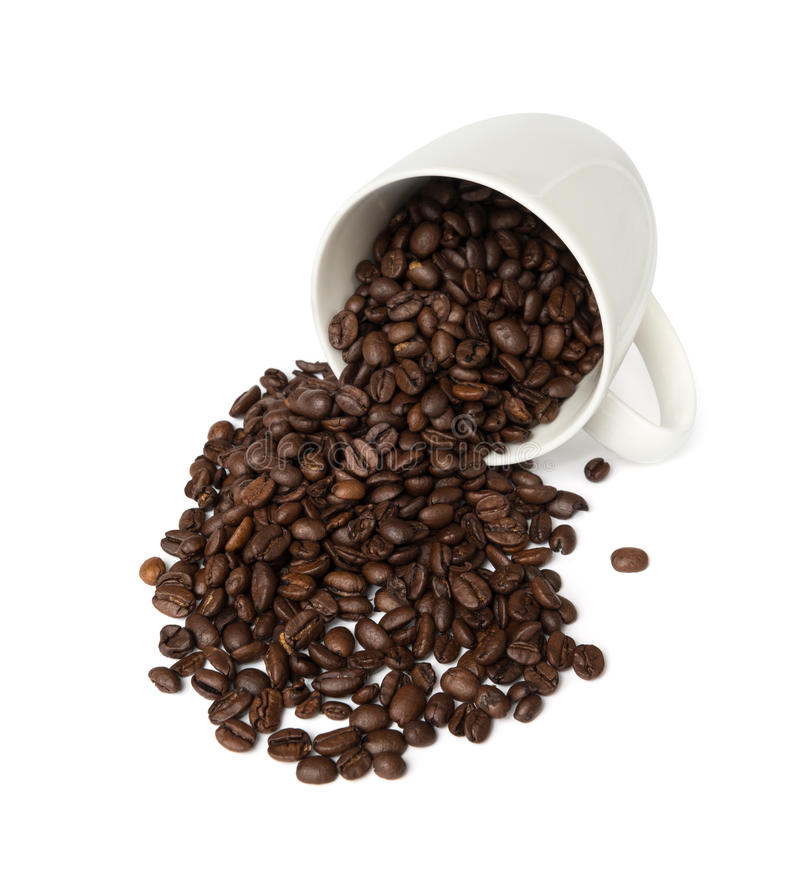 Chicchi di caffè freschi in tazza fotografie stock libere da diritti