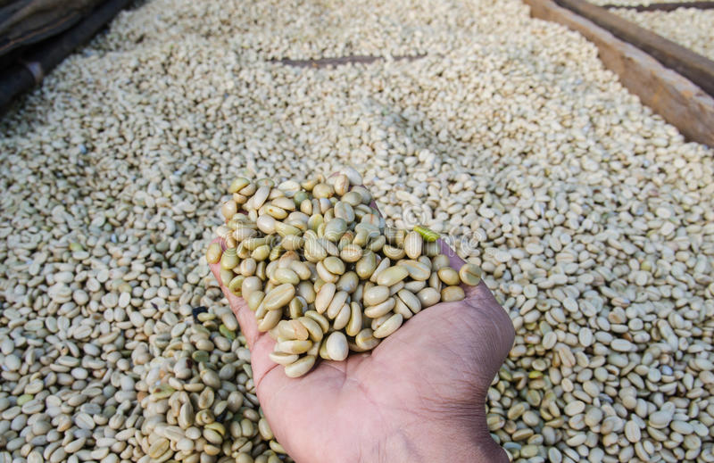 chicchi di caffè in mani immagini stock libere da diritti