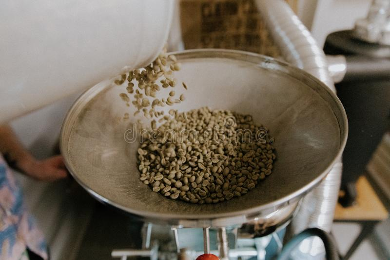 Chicchi di caffè naturali organici verdi freschi che sono versati nella macchina industriale di torrefazione in una caffetteria fotografia stock libera da diritti