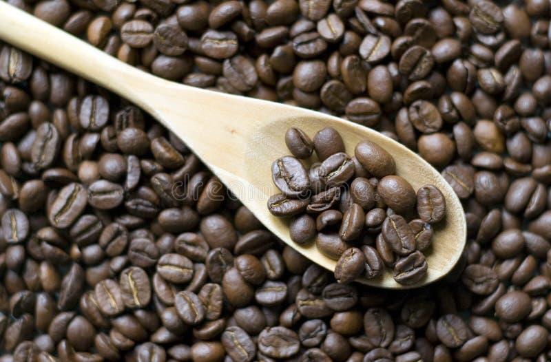 Chicchi di caffè sul cucchiaio fotografia stock