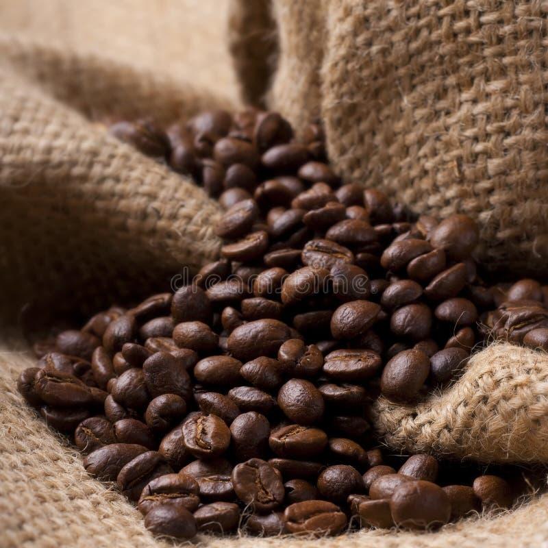 Chicchi di caffè sul tessuto della tela da imballaggio immagine stock