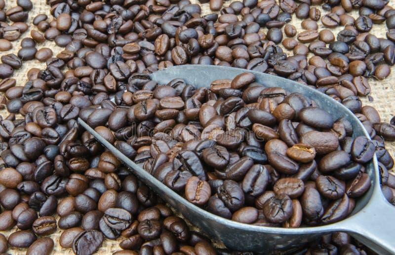 Chicchi di caffè in un mestolo fotografia stock
