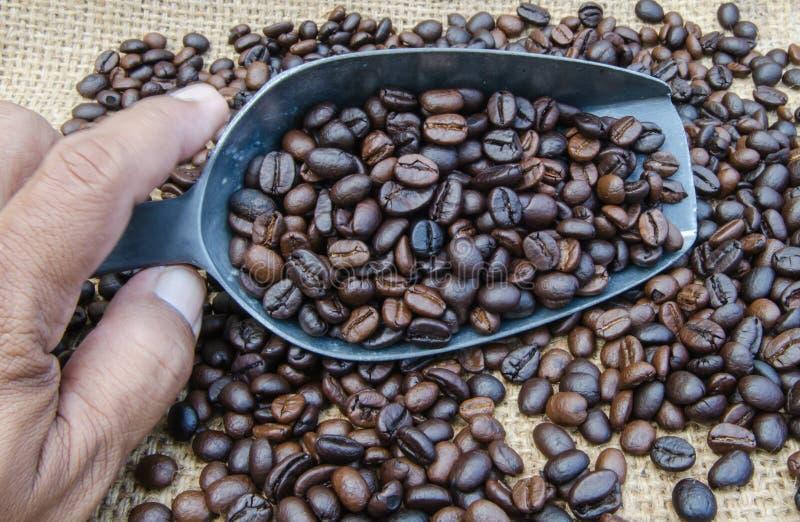 Chicchi di caffè in un mestolo immagine stock libera da diritti