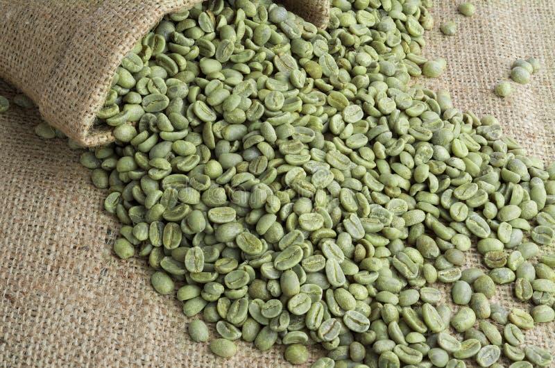 Chicchi di caffè verdi fotografie stock libere da diritti