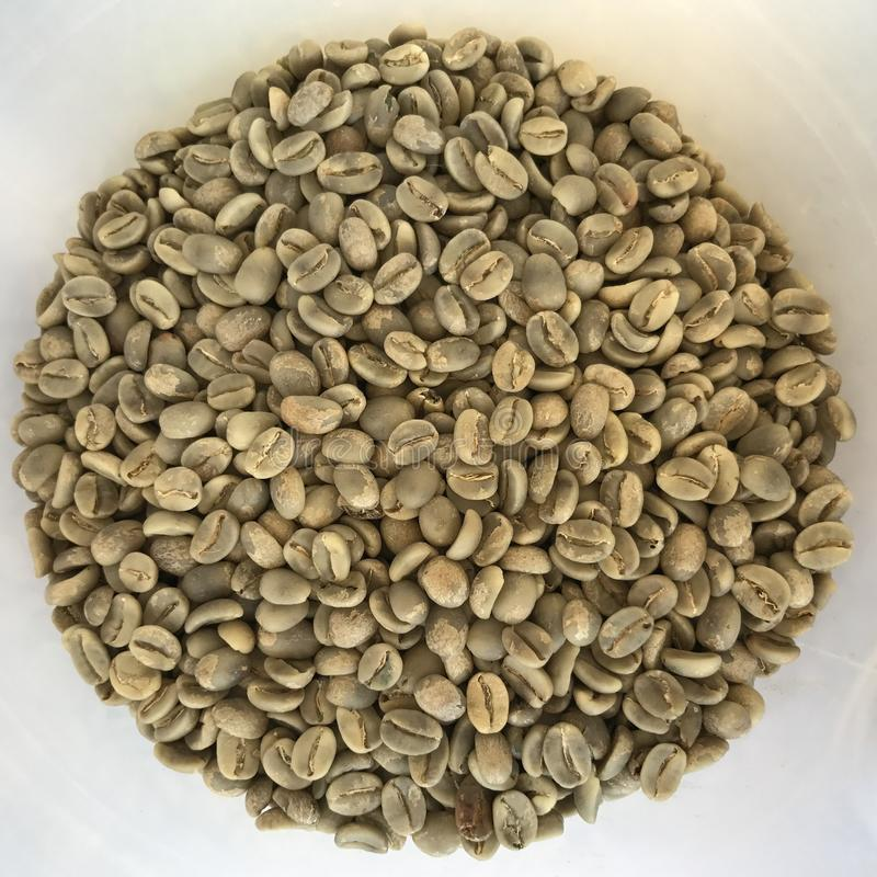 Chicchi di caffè verdi immagini stock libere da diritti
