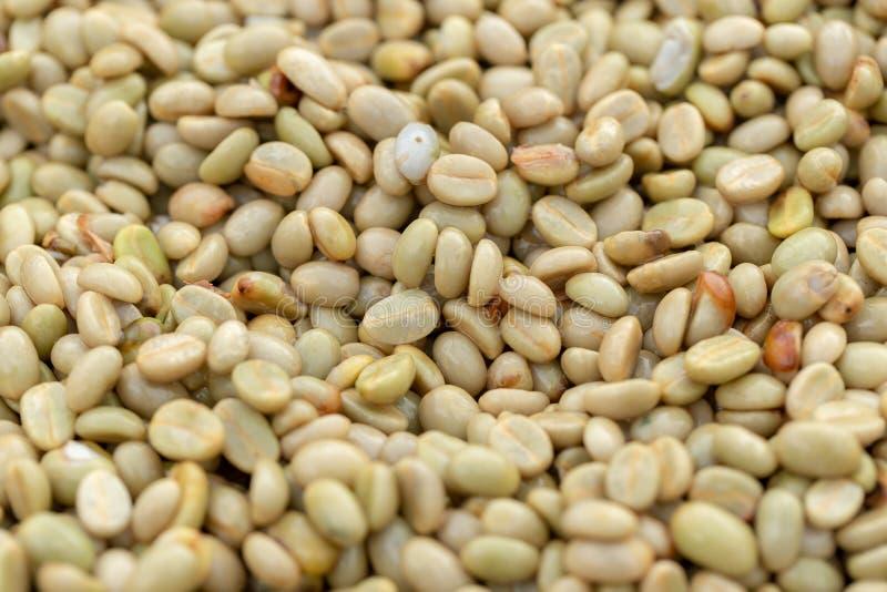 Chicchi di caffè verdi organici naturali immagine stock