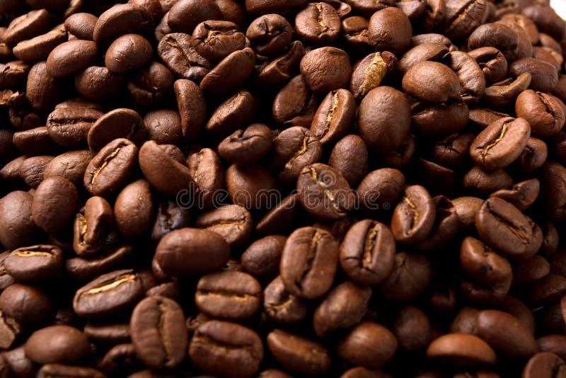 Chicco di caffè fotografia stock libera da diritti
