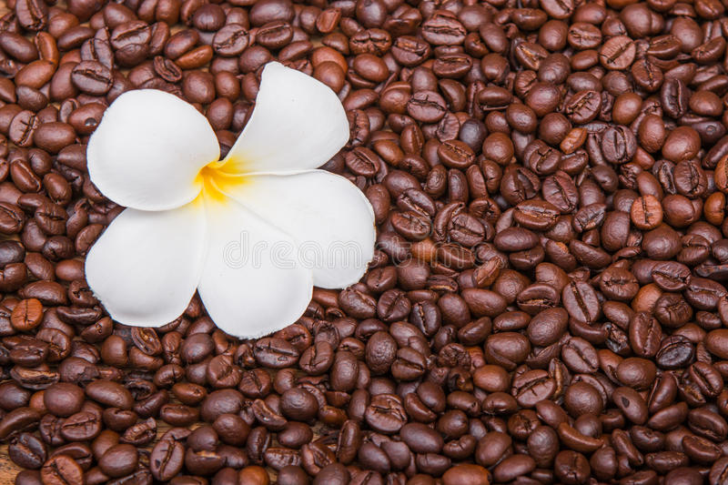 Download Chicco di caffè fotografia stock. Immagine di bevanda - 55362970