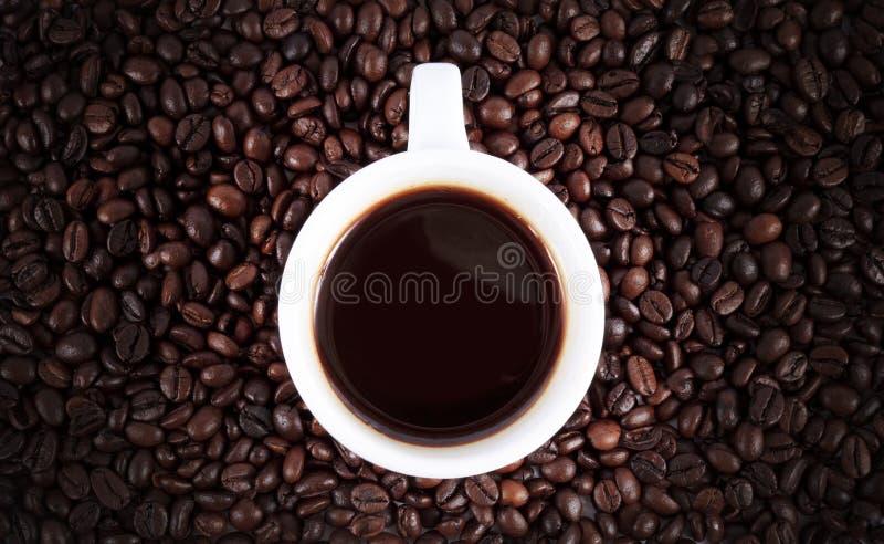 Chicco di caffè dell'arabica del Brown isolato immagini stock libere da diritti