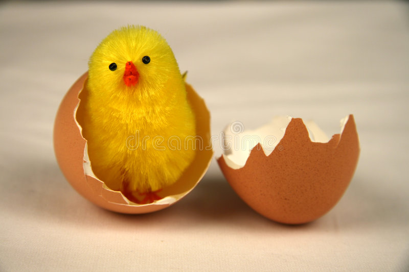 Chick coming out. Little yellow chick coming out of an egg royalty free stock photography