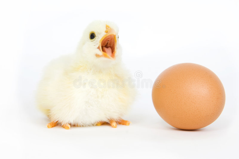 Chick and egg royalty free stock photos