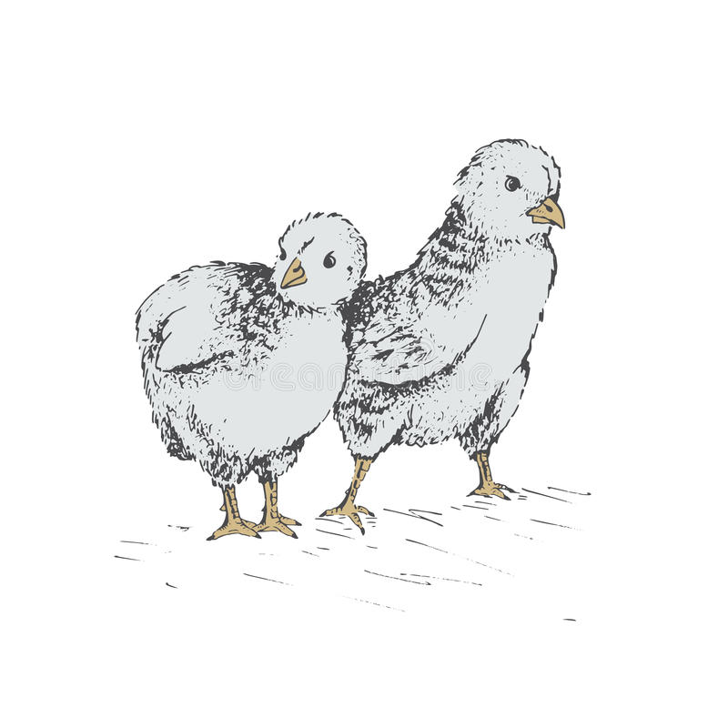 The chick egg royalty free illustration