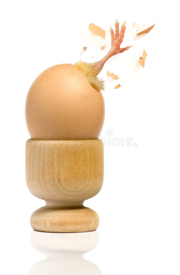Free Chick Escaping Breaking Egg Shell Freedom Royalty Free Stock Photography - 7864297