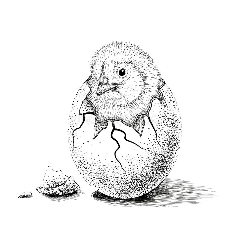 Chick hatched from eggs royalty free illustration