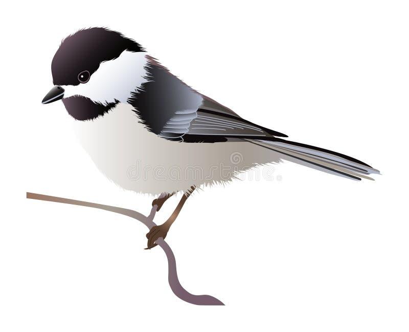 chickadee покрынный чернотой иллюстрация штока