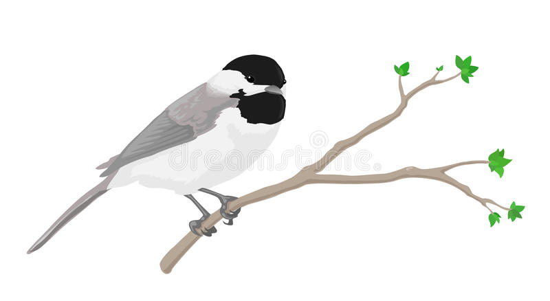 Chickadee. A black-capped chickadee perched on a branch stock illustration