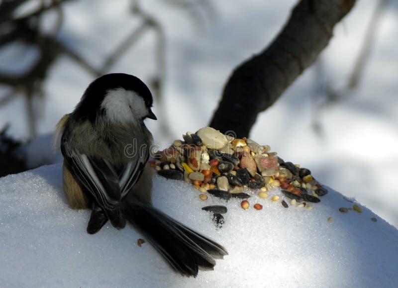 Chickadee 3 lizenzfreies stockfoto