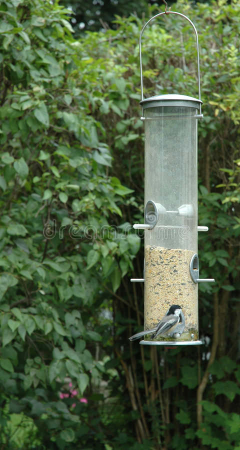 Download Chickadee At The Bird Feeder Stock Image - Image: 38237