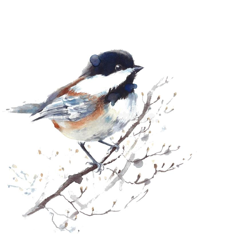 Chickadee bird sitting on the branch watercolor painting illustration isolated on white background. Chickadee bird sitting on the branch watercolor painting vector illustration