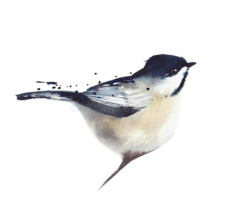 Chickadee bird sitting on the branch watercolor painting illustration on white background. Chickadee bird sitting on the branch watercolor painting illustration vector illustration