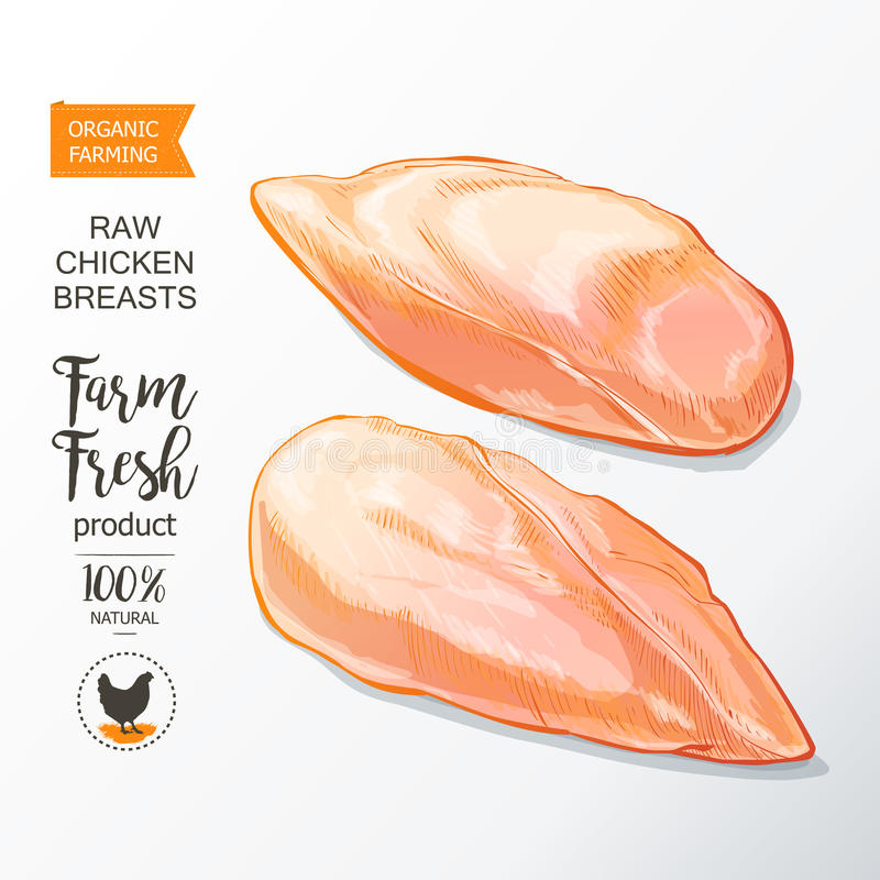 Chicken breast vector. Fresh chicken breast. Top view. on a white vintage vector sketch hand drown vector illustration
