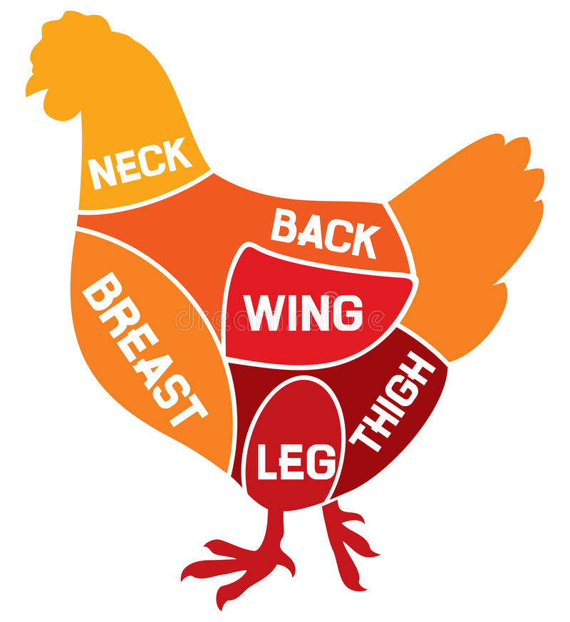 Chicken cuts diagram. Chicken meat diagram, chicken symbol vector illustration
