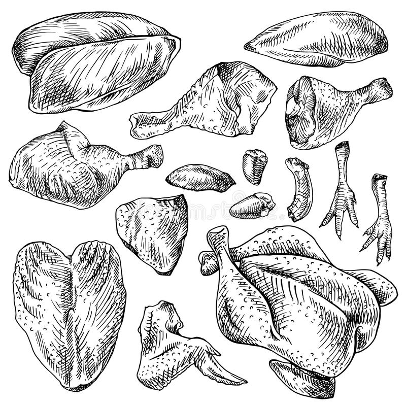 Chicken cuts, hen parts. Domestic bird meat set. vector illustration
