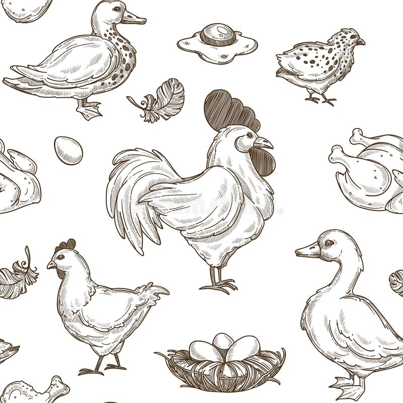 Chicken and ducks sketch pattern background. Vector seamless stock illustration