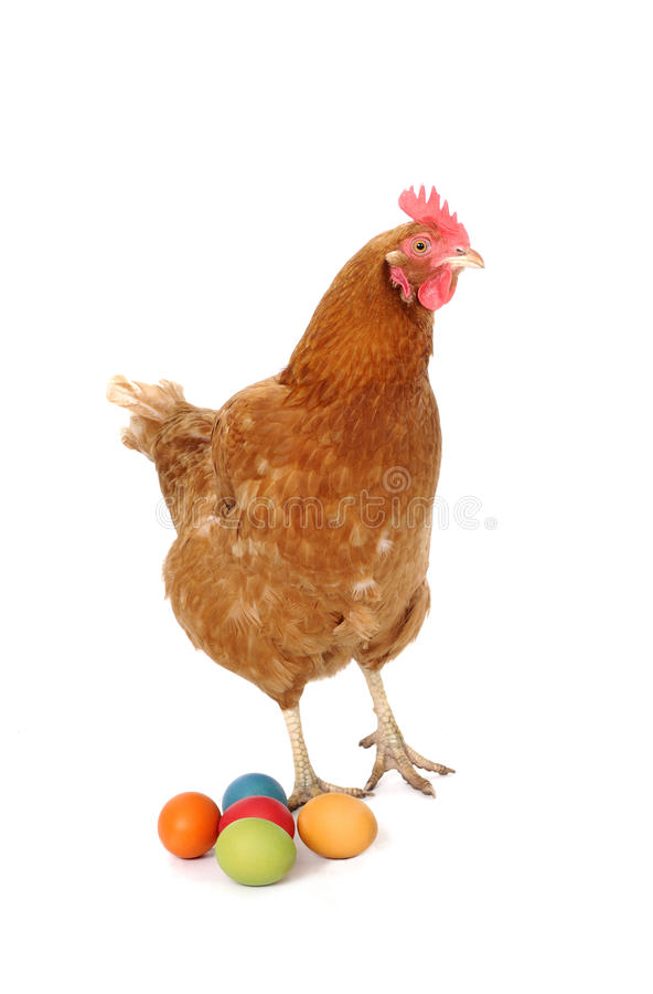 Download Chicken with easter eggs stock photo. Image of fowl, brown - 18887736