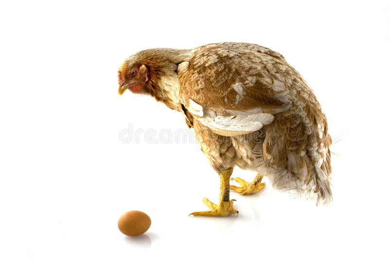 Download Chicken-with-egg stock photo. Image of brown, animal, isolated - 3972684
