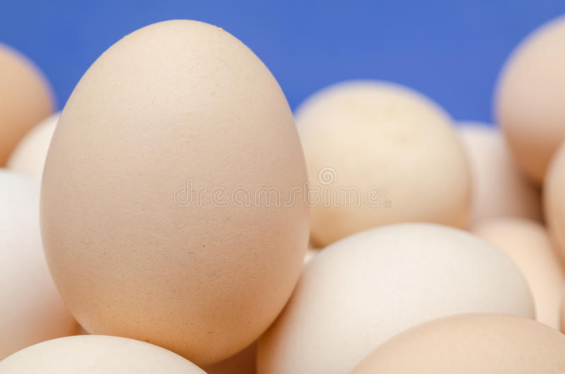 Chicken Egg Close Up stock photos