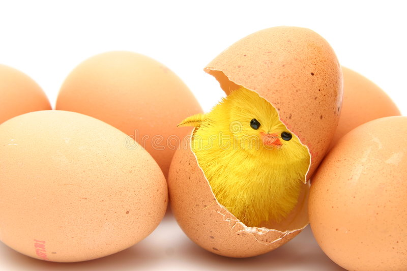 Chicken and eggs stock images
