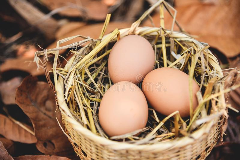 Chicken eggs basket nest with dry autumn leaves background royalty free stock photos