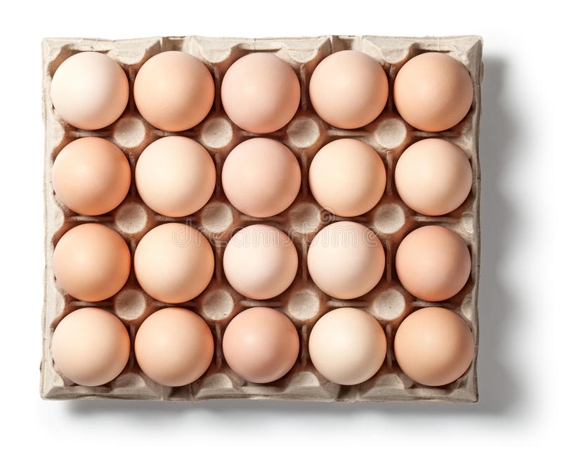 Chicken Eggs in Container. With natural shadow isolated on white background. Top view royalty free stock photography