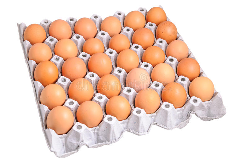 Chicken eggs stock photo