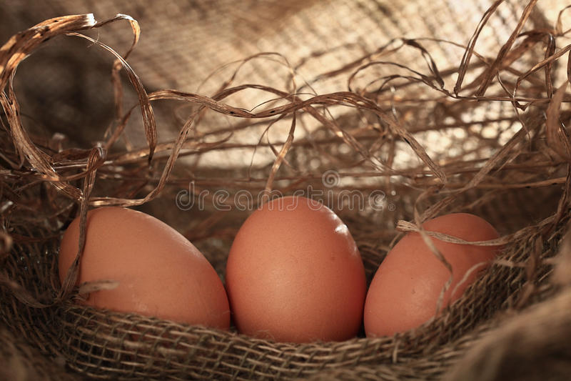Chicken eggs. On the farm stock image