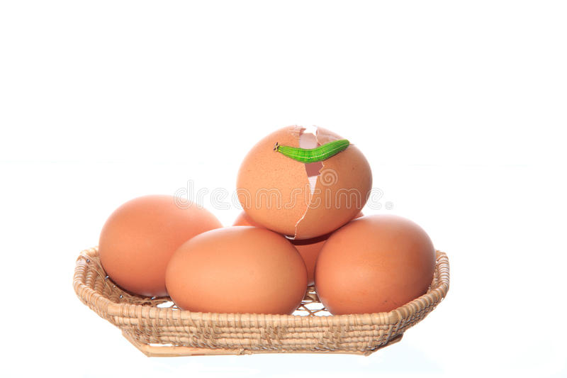 chicken eggs and green worm stock photography