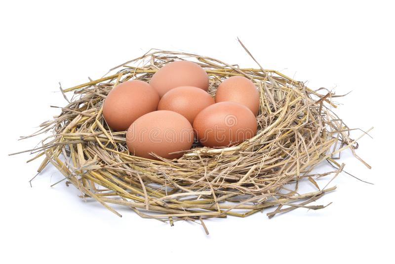 Chicken eggs in hay nest isolated on white background royalty free stock photos