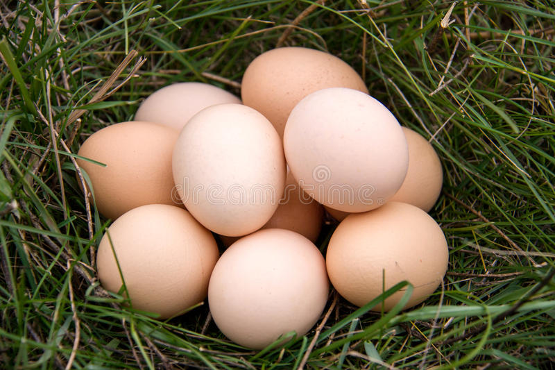 Download Chicken Eggs Lying In A Green Grass Stock Photo - Image: 83720012