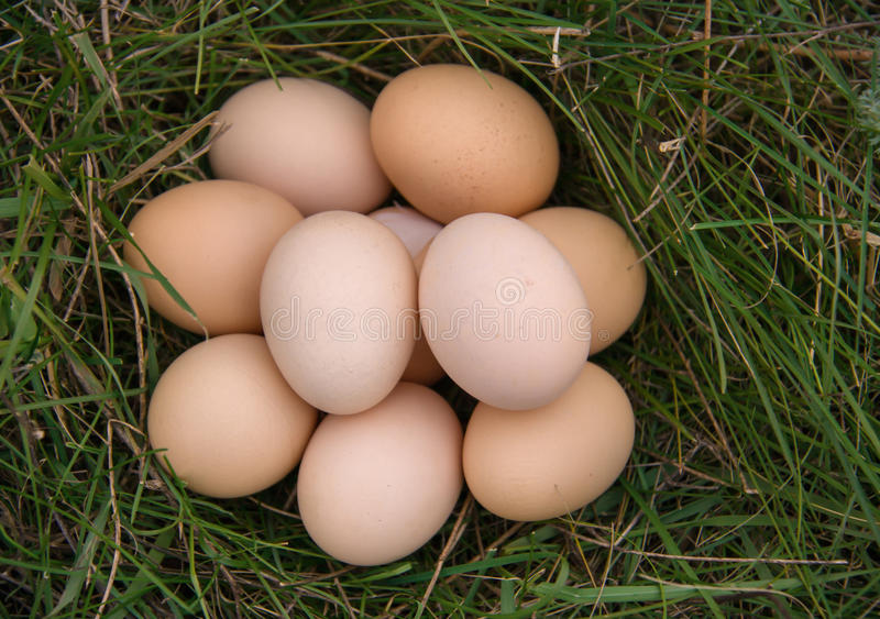 Chicken eggs lying in a green grass.  royalty free stock photos